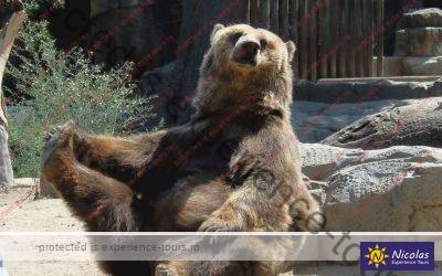Bear Sanctuary and Brasov Bran Day Trip (12-14h)